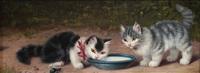 zwei katzenkinder an der milchschüssel by julius adam the younger