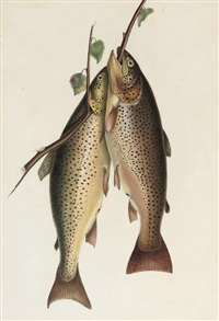 two brown trout by william (sir) jardine (editor)