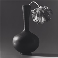 parrot tulip in black vase by robert mapplethorpe