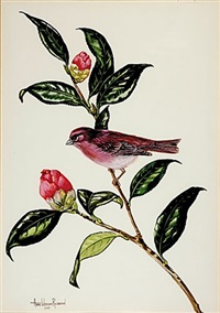 purple finch with camellia by anne worsham richardson