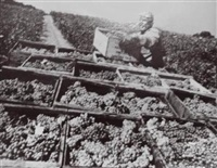 three grape pickers by pirkle jones