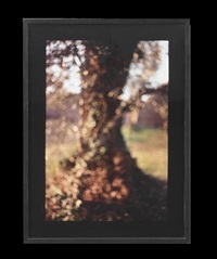 tree trunk, tivoli by david armstrong