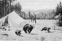 a mother black bear and her two cubs fleeing a camp by irvin (shorty) shope