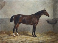 portrait of a racehorse in a stable by frank paton