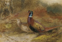 a cock and hen pheasant in a woodland glade by charles whymper