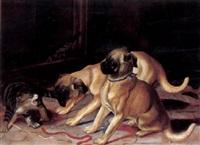 zwei hunde streiten mit einer katze by william frank calderon