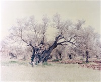 olive 15 (from the ghost series) by ori gersht