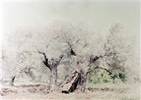 olive 14 (from the ghost series) by ori gersht