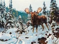 bull moose by carl clemens moritz rungius