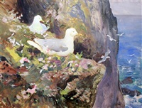 gulls on sea cliffs by charles walter simpson