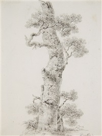 study of a tree by balthasar anton dunker