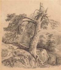 landschaftsstudie mit arven und felsen by alexandre calame