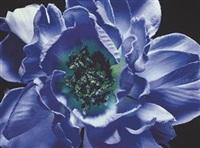 light blue (+ 4 others; 5 works) by boyd webb