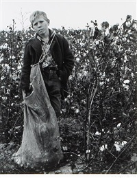cotton picker near buttonwillow, ca by william heick
