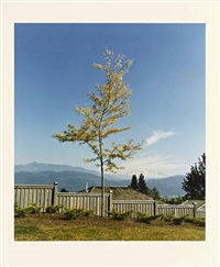 tree on the formera site of camera obscura by rodney graham