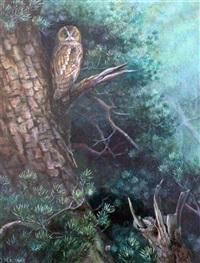 tawny owl by david morrison reid henry