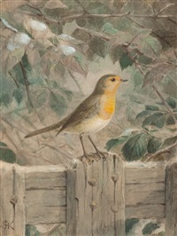 the robin by johannes gerardus keulemans