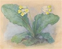 schlüsselblume by ernst kreidolf