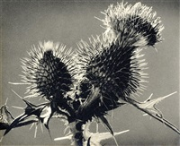 distel by erich angenendt