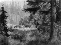 rotwild auf der lichtung by a. motsch
