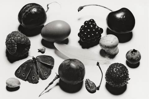 still life with grape and moth ny by irving penn