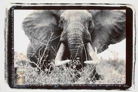 tsavo north athi tiva lugga bull elephant circa 150 160 lbsside by peter beard