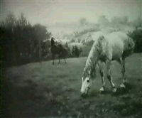 horses in a pasture;                    early morning, autumn by walter prell