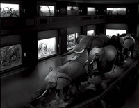 escaping elephants, museum of natural history, nyc by matthew pillsbury