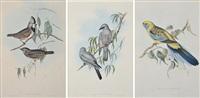 i) platycercus flaveolus ii)graucalus swainsonii iii) oreoica gutturalis a trio of works by john gould