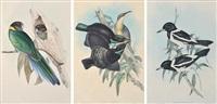 i) craticus picatus ii)ptiloris victorae iii) platycercus semitorquatus a trio of works by john gould