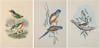 i)psephotus haematogaster ii)pitta concina iii)cthonicola minima a trio of works by john gould