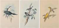 i) petroica bicolor ii) pachycare flavo-grisea iii) aplonis metalica a trio of works by john gould