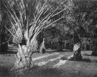 sun-splashed date trees by doris martha weber