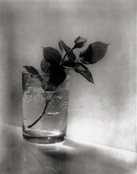 josef sudek. 18 later by josef sudek