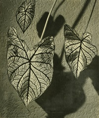pattern (leaf study) by hans kaden