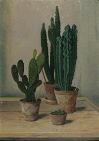 study of cacti by robert knaus