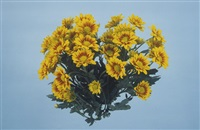 billet doux (yellow dasies) by boyd webb