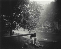 alligator's approach by sally mann