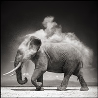 elephant with exploding dust by nick brandt