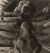 dog cabin by william wegman