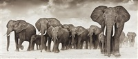 elephants on the move by nick brandt