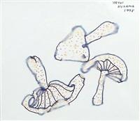 mushrooms by yayoi kusama