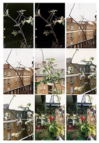 process (apple tree) by wolfgang tillmans