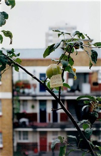 please leave this one by wolfgang tillmans