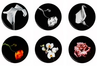 set of 6 plates by robert mapplethorpe