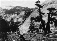 sierra junipers, high sierras (parmelian print) by ansel adams