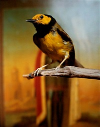 hooded warbler ii by andres serrano