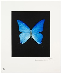 providence (from butterfly portfolio) by damien hirst