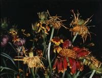 flower by nobuyoshi araki