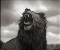 lion roar, maasai mara by nick brandt